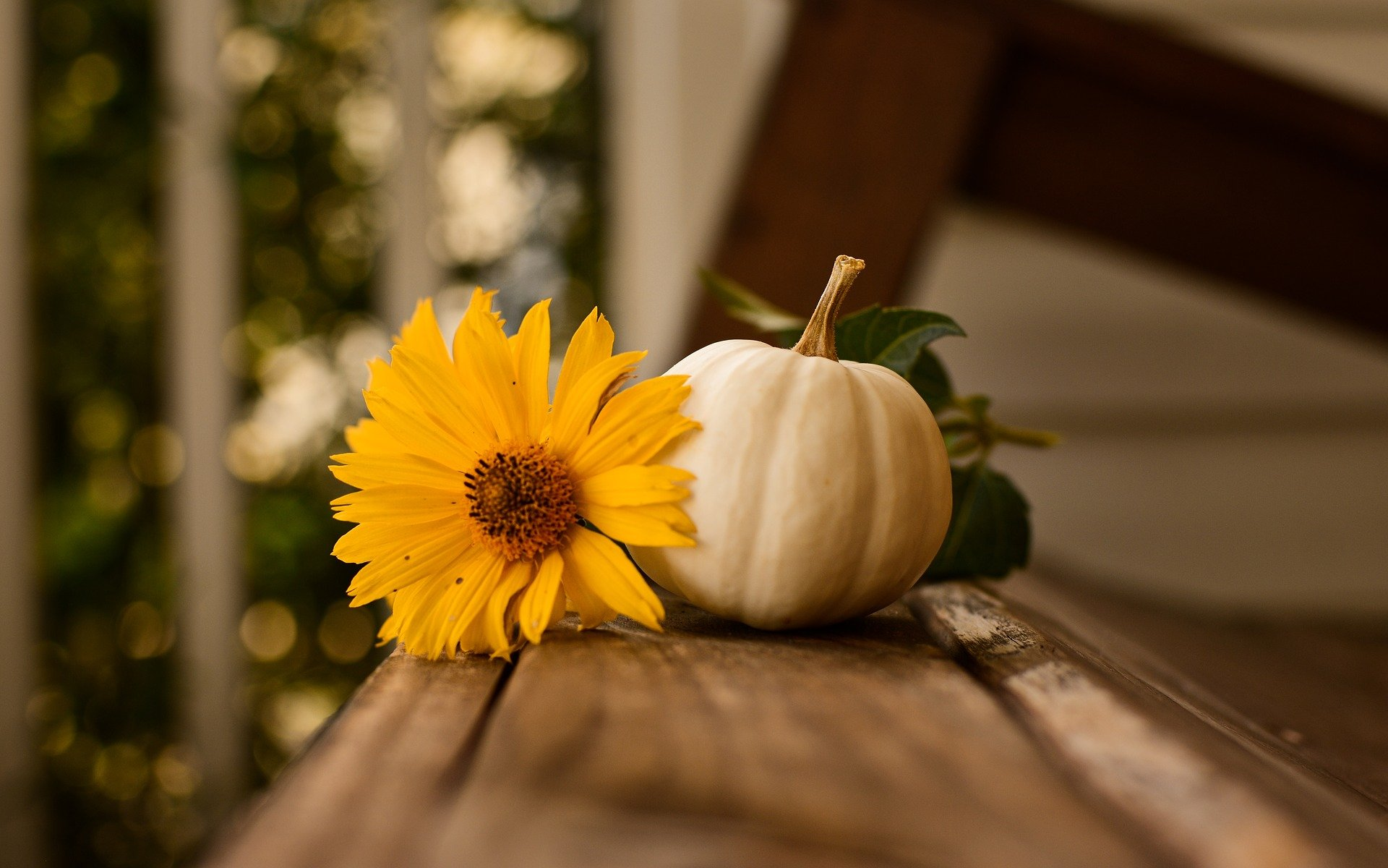 Thanksgiving Holiday Hours and Contact Information